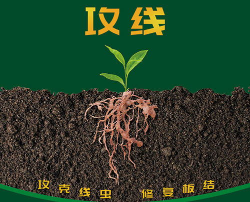 怎样辨别根线虫病?如何高效防治根线虫?